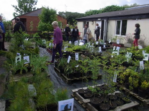 Fantastic displays of healthy plants for sale drew in the crowds